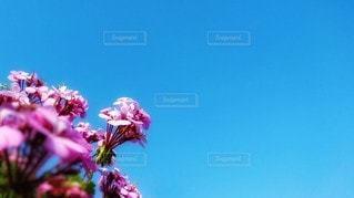 青空の写真・画像素材[3337063]