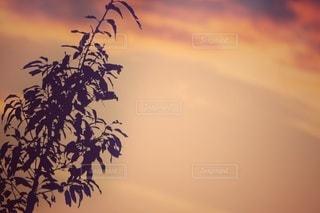 夕景のシルエットの写真・画像素材[3340221]
