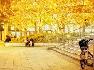 イルミネーションと自転車の写真・画像素材[3340239]