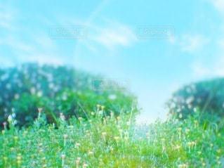 草原と公園と青空との写真・画像素材[3344685]