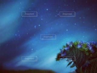 星空に佇む紫陽花の写真・画像素材[3373332]
