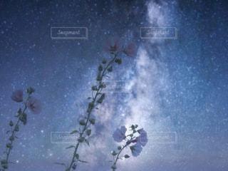 星空に立葵の写真・画像素材[3584283]