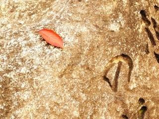 石碑の紅葉一葉の写真・画像素材[3801821]