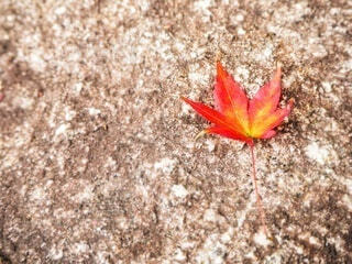 石碑の紅葉かえで一葉の写真・画像素材[3801905]
