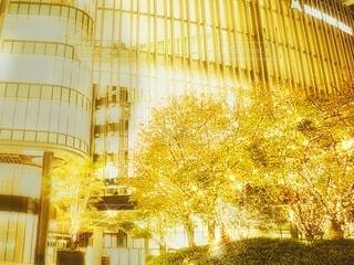 風景,建物,夜景,ビル,屋外,大阪,植物,綺麗,幻想的,観光地,アート,景色,ライト,ガラス,光,木々,観光,背景,樹木,イルミネーション,外,キラキラ,クリスマス,日本,Snapmart,明るい,施設,印象的,電飾,壁紙,ショッピングモール,願い,飾り,希望,輝き,ライティング,チラシ,ちらし,ブログ,グランフロント大阪,インスタ映え,PR,シャンパンゴールド,グランフロントクリスマス