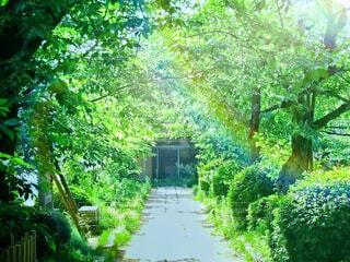 新緑の小路の写真・画像素材[4407783]