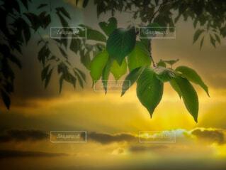 新緑の朝にの写真・画像素材[4409822]