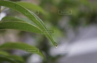 自然,木,雨,緑,梅雨