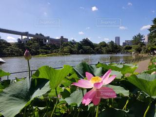 近くの花のアップの写真・画像素材[1312622]