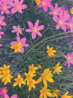 花,ピンク,植物,道端