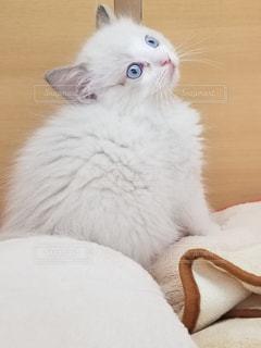 猫,ペット,びっくり,おどろいた顔