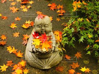 紅葉,屋外,草,樹木,地面,草木,永源寺