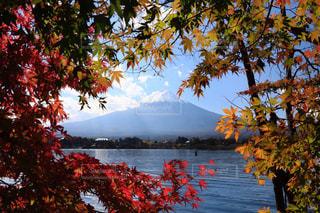 空,富士山,紅葉,観光地,樹木,河口湖,草木