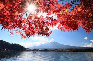 風景,空,富士山,紅葉,屋外,湖,観光地,水面,景色,樹木,河口湖,草木