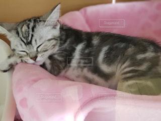 猫のくつろぎの写真・画像素材[1626970]