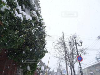 冬,雪,屋外,白,標識,樹木,ホワイト