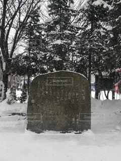 冬,森林,雪,屋外,白,北海道,樹木,小樽,石,ホワイト