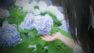 花,緑,あじさい,紫陽花,梅雨,6月