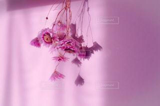 花,ピンク,pink
