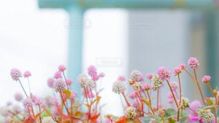 花,屋外,ピンク,pink,草木