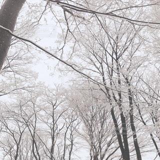 雪の中のの写真・画像素材[2811423]