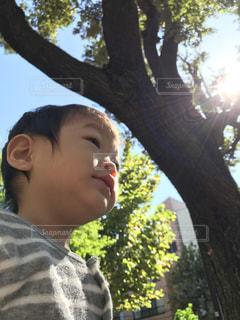 風景,木漏れ日,日差し,子供,秋空