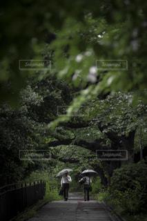 自然,公園,木,雨,傘,東京,緑,街,都会,梅雨,ビジネス