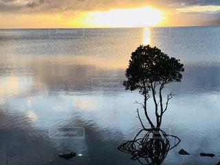 海,空,夕日,雲,沖縄,マングローブ,ヒルギ