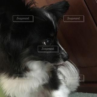 犬の写真・画像素材[44647]
