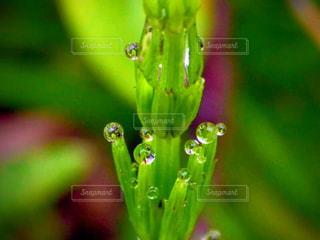 雨,屋外,水滴,雫,草木,緑色,露玉