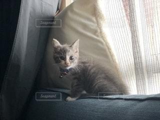 ソファーの上でおウチ探検中の写真・画像素材[2292462]