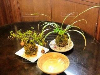 テーブルの上の観葉植物の写真・画像素材[2742980]