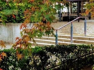 階段と紅葉の写真・画像素材[2765464]