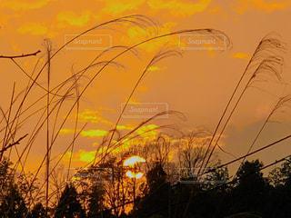 自然,空,屋外,太陽,夕暮れ,オレンジ,光,草,樹木,景観