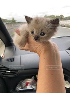 手のり猫の写真・画像素材[2889251]