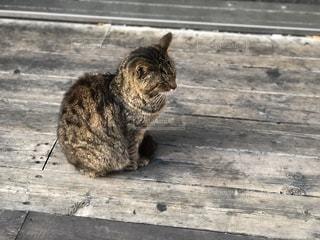 ウッドデッキの猫の写真・画像素材[2911425]