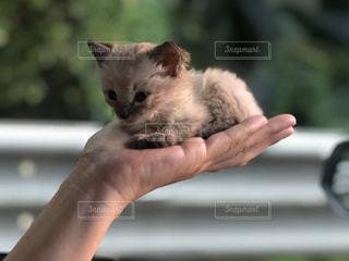 猫,動物,ペット,子猫,人物,人,癒し,ネコ