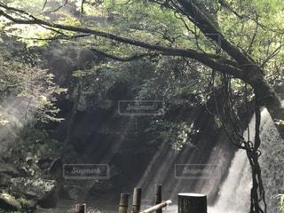 太陽の光の写真・画像素材[1262383]
