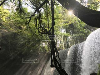森の中の大きな滝の写真・画像素材[1262432]