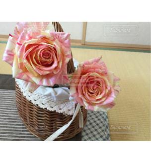 縞模様のピンク薔薇の写真・画像素材[1270354]