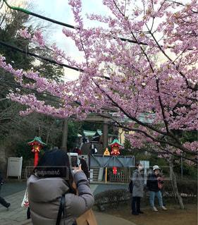 桜を撮る女性の写真・画像素材[1840843]
