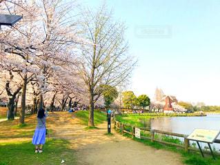 浮間公園の桜の写真・画像素材[1843020]