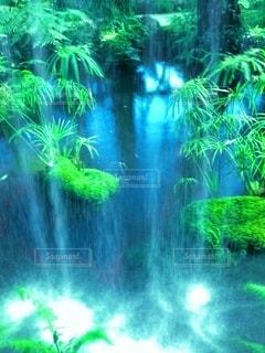 温室の植物園の写真・画像素材[3358697]