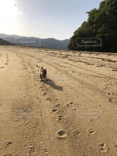 砂浜を歩いている人のグループの写真・画像素材[1262219]