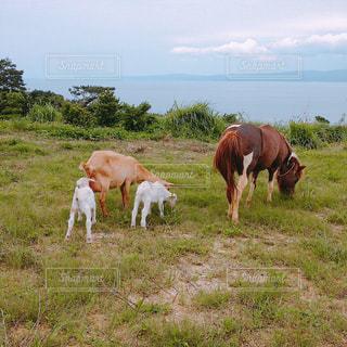 緑豊かな緑の草原で放牧茶色と白の馬のグループの写真・画像素材[1395786]