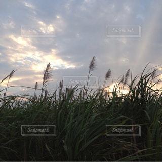 秋の写真・画像素材[1395830]