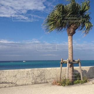 ヤシの木とビーチの写真・画像素材[1395836]
