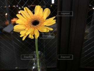 ガラスの花瓶に黄色い花の写真・画像素材[1402631]