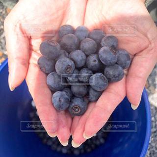 フルーツ,果物,ブルーベリー,農家,フレッシュ