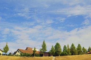 ハーベストの丘の写真・画像素材[1316982]